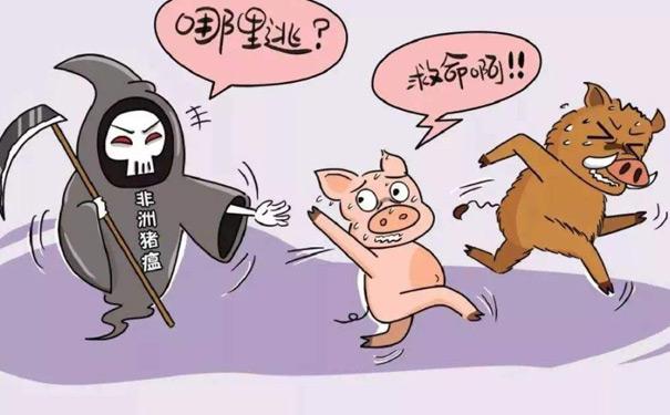 面对非洲猪瘟猪只能哪里逃救命啊